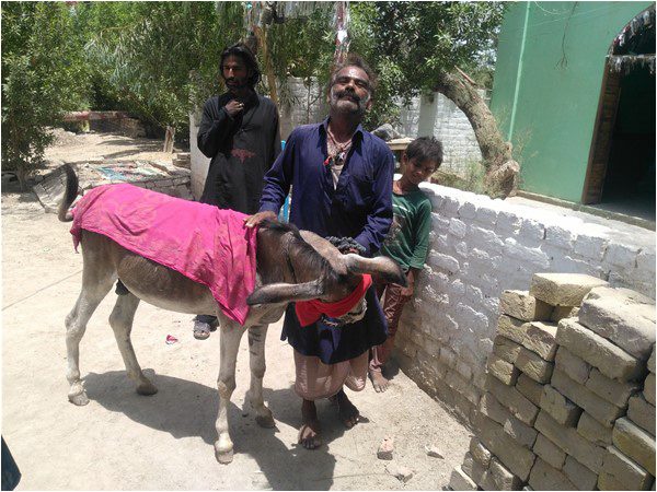 Donkeys and healing miracles - The Friday Times